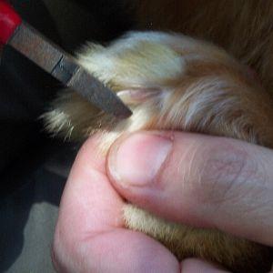 Die Salbe das Mittel von gribka der Beine